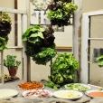 """Interactive """"Wall of Greens"""" Salad Bar"""