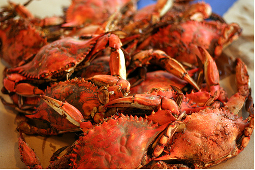 marylandcrabs2
